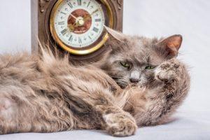 Ein zerzauste ältere Katze liegt gemütlich vor einer kleinen Standuhr