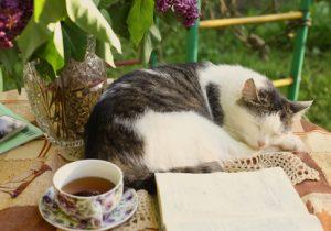 Erwachsene Katzen schlafen gerne in deiner Nähe und vor allem auch viel
