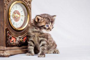 Ein Katzenbaby sitzt neugierig vor einer kleinen Standuhr