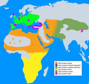 Die Karte zeigt u.a. die Verbreitung der Falbkatze (Vorfahrin unserer Hauskatze) in Europa, Afrika & Westasien