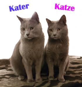 Kater oder Katze – Wer passt zu Dir?