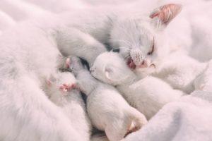Eine weiße Katze säugt ihre Katzenbabys