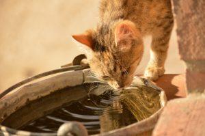 Warum Trinkt Meine Katze So Wenig
