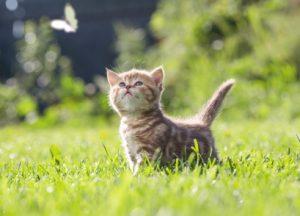 Katzenbaby steht im Gras und schaut neugierig einem Schmetterling hinterher