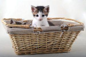 Kätzchen sitzt in einem Einkaufskorb