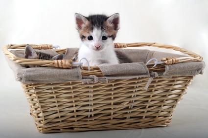 Wie teuer ist eine Katze?
