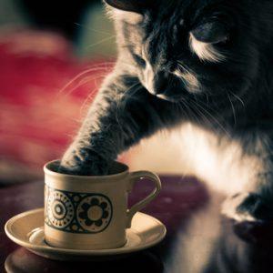10 Tipps, wie Deine Katze mehr trinkt