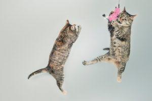 Zwei Katzen sind nach einem Sprung in der Luft