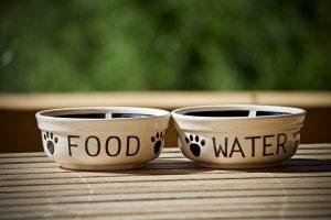 Futter- und Wassernapf