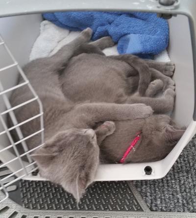 Einzug der ersten Katze