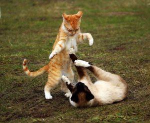 Zwei Katzen toben