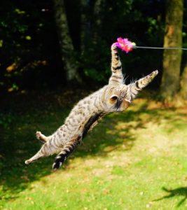 Katze spielt wild mit dem Federwedel