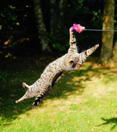 Gedanken zum Katzen Zusammenführen