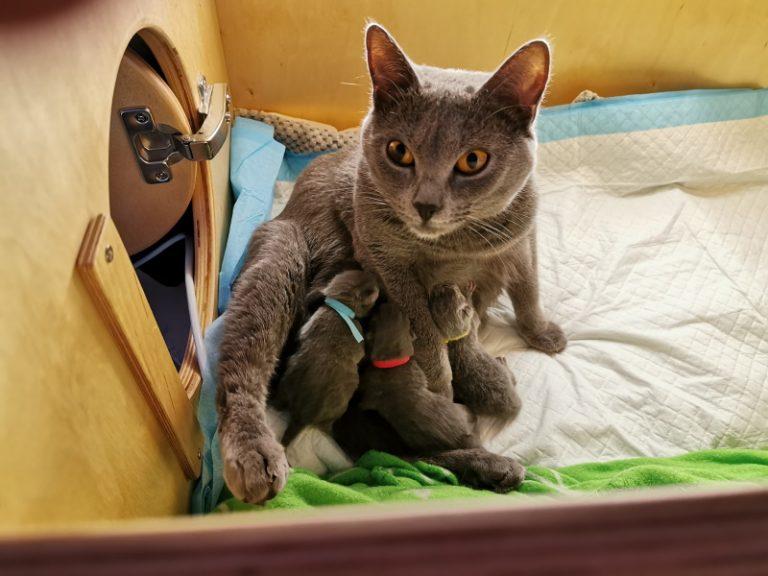 Mang de Meren - Emilia mit 3 Kitten 10 Stunden
