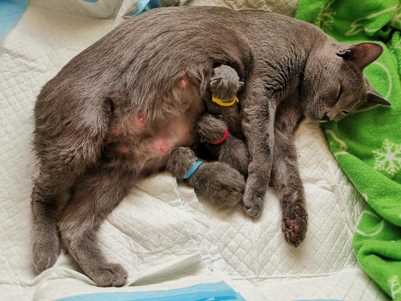 Mang de Meren - Emilia mit 3 Kitten