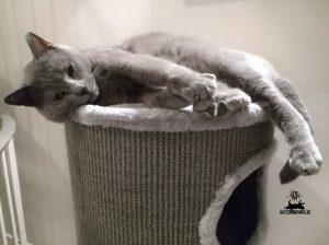 Welches Katzenbett ist das Richtige?