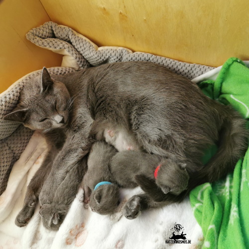 Mang de Meren - Mutti mit 7 Tage alte Jungs