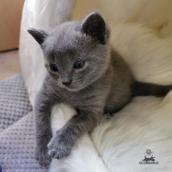 Kitten und seine Kuschelhöhle
