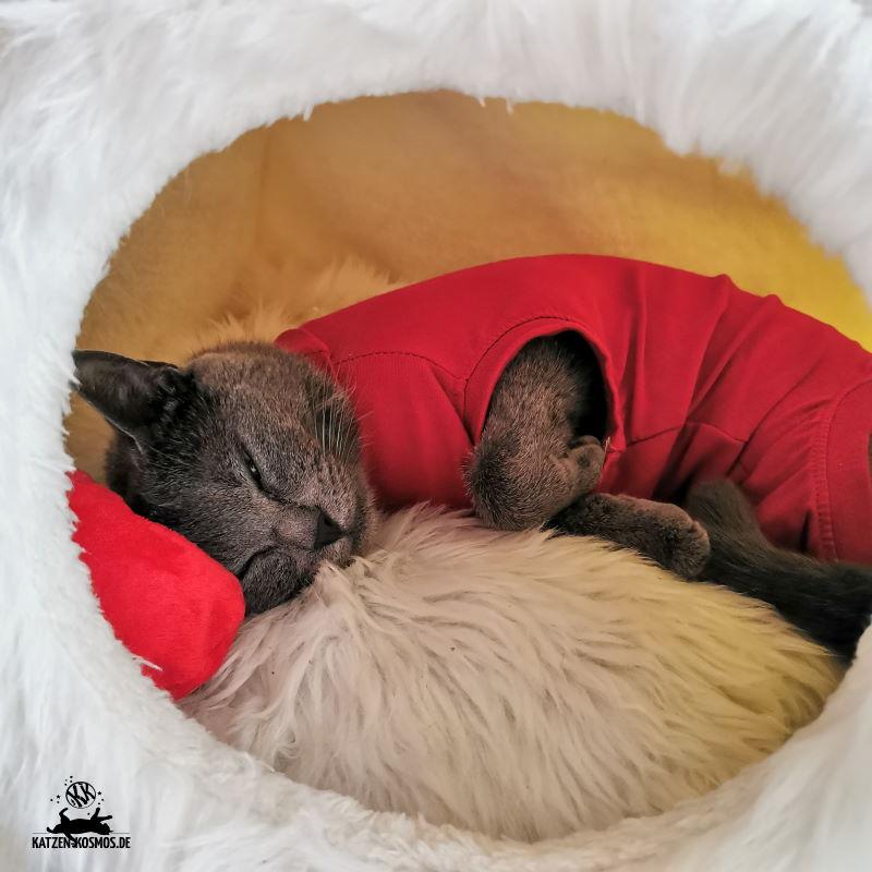 Chartreux Cattery Mang de Meren - Katzen und ihr Verhalten