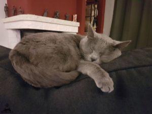 Ciara-schläft