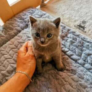Mang de Meren_Daisy 1 Monat alt