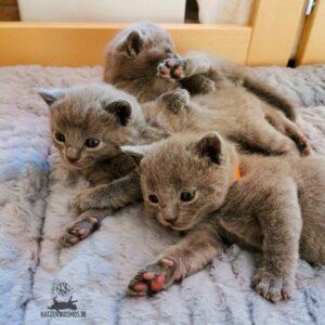 Mang de Meren_Kitten zusammen