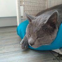 Collin (Karträuser Kater) im IKEA Korb am schlafen