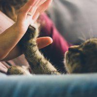 High five Katzenpfote