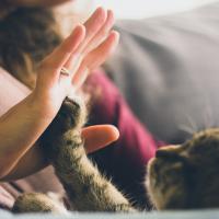 Katze gibt High Five